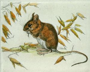 Longtailed Fieldmouse (Restrike Etching) by Winifred Austen