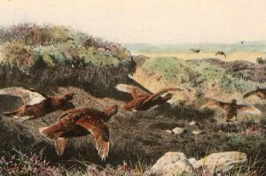 Flying Grouse (under bank) (Restrike Etching) by Archibald Thorburn