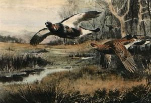 Flying Grouse (over stream) (Restrike Etching) by Archibald Thorburn