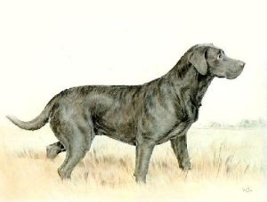 Labrador (Restrike Etching) by Ward Binks