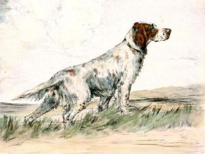 English Setter (Restrike Etching) by Ward Binks