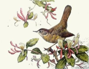 Nightingale (Restrike Etching) by Winifred Austen