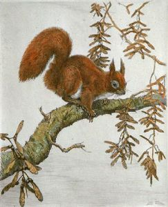 Squirrel (Restrike Etching) by Winifred Austen