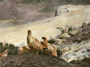 Willow Ptarmigan (Restrike Etching) by Archibald Thorburn