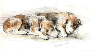 Airedale Puppies (Restrike Etching) by Herbert Thomas Dicksee