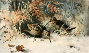 Woodcock (Restrike Etching) by Archibald Thorburn