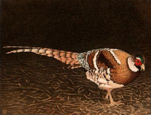 Elliots Pheasant (Restrike Etching) by Alex Mackay