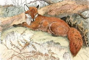 Fox (Restrike Etching) by Winifred Austen