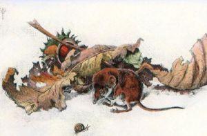 Pigmy Shrew (Restrike Etching) by Winifred Austen