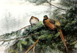 Pheasant (Restrike Etching) by George Edward Lodge