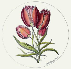 Cluster Tulip (Restrike Etching) by Anonymous