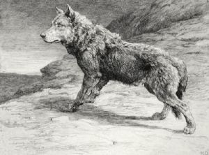 Wolf on the Prowl (Restrike Etching) by Herbert Thomas Dicksee