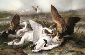 Swannery Invaded by Eagles (Restrike Etching) by Sir Edwin Henry Landseer