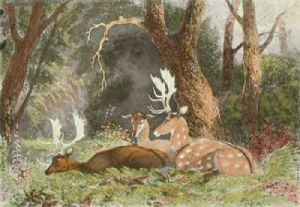 Fallow Deer (Restrike Etching) by Newton Fielding