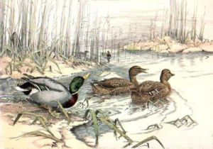 In the Creek (Restrike Etching) by Anonymous