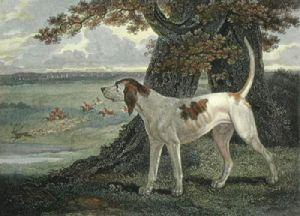 Stag Hound (Restrike Etching) by Philip Reinagle
