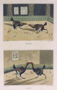 Cock Fighting Match Pl. I (Restrike Etching) by Henry Alken