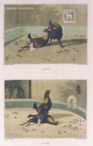 Cock Fighting Match Pl. II (Restrike Etching) by Henry Alken