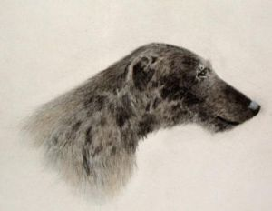 Deer Hound (Restrike Etching) by Anonymous