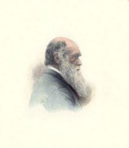 Charles Darwin (Restrike Etching) by Anonymous