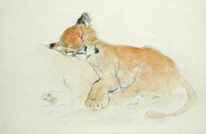 Lion Cub (Restrike Etching) by Anonymous