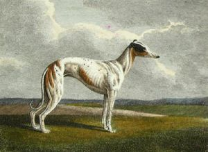 The Greyhound (Restrike Etching) by Samuel Howitt