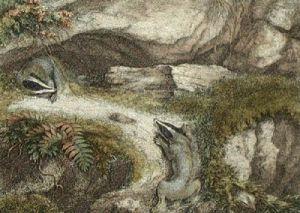 The Badgers (Restrike Etching) by Samuel Howitt