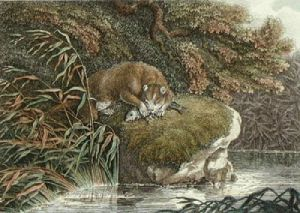 The Otter (Restrike Etching) by Samuel Howitt