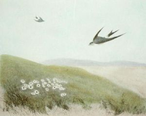 Swift (Restrike Etching) by Anonymous