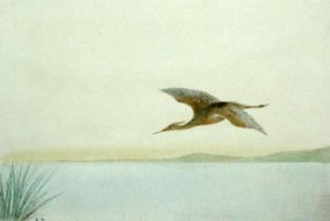 Heron (Restrike Etching) by Anonymous
