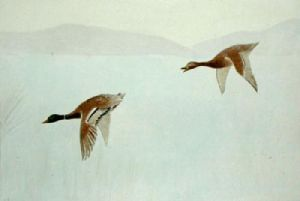 Mallards Flying Down (Restrike Etching) by Anonymous