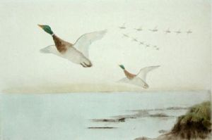 Mallards Flying Up (Restrike Etching) by Anonymous