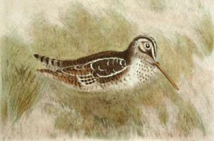 Snipe (Restrike Etching) by Anonymous