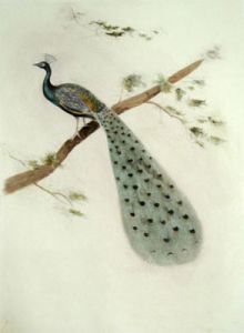 Peacock (Restrike Etching) by Anonymous