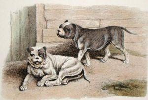Bulldogs (Restrike Etching) by Anonymous