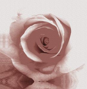 Rose I by Erin Rafferty