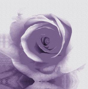 Rose II by Erin Rafferty