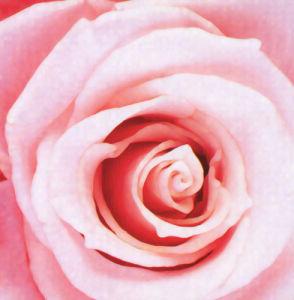 Rose IV by Erin Rafferty