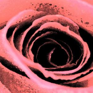 Fresco Roses by Erin Rafferty