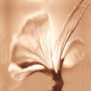 Mocha flora 2 by Erin Rafferty