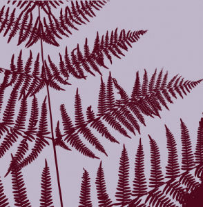 Lilac ferns by Erin Rafferty