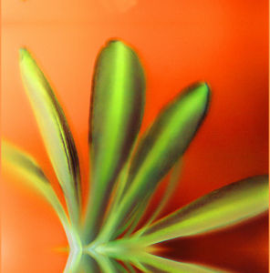 Orange Petals by Erin Rafferty