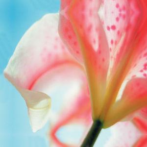 Spring Blossoms by Erin Rafferty