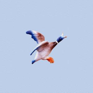Flying Duck 3 by Erin Rafferty