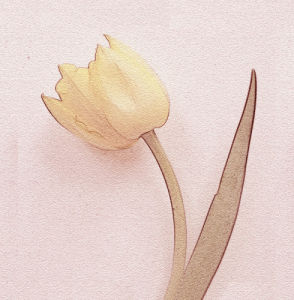 Tulip I by Erin Rafferty