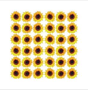 Flower Power by Erin Rafferty