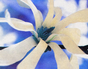 Symphony in Blue & White by Erin Rafferty