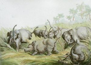 Rhinoceros Hunted by Elephants (Restrike Etching) by Samuel Howitt