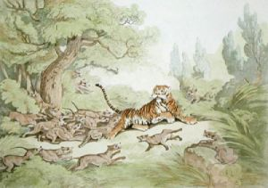 The Tiger Hunted by Wild Dogs (Restrike Etching) by Samuel Howitt
