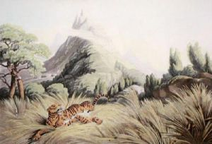 Tiger Killed by Poisoned Arrow (Restrike Etching) by Samuel Howitt